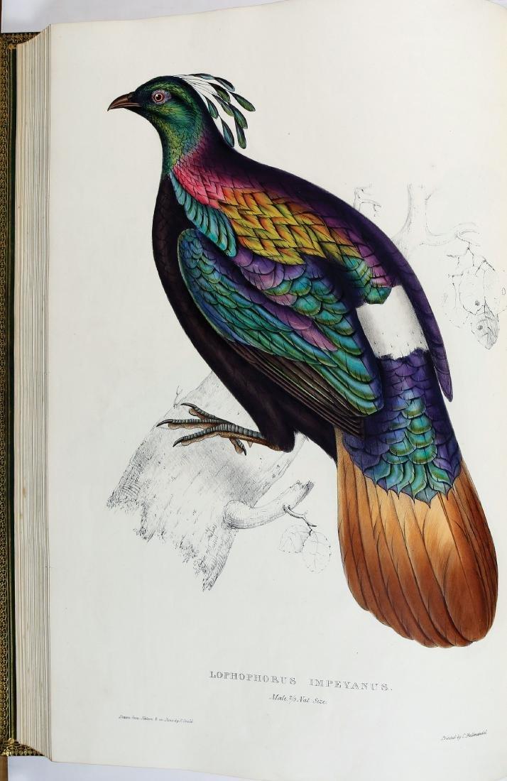 Gould Birds of Himalaya, 1st Ed.