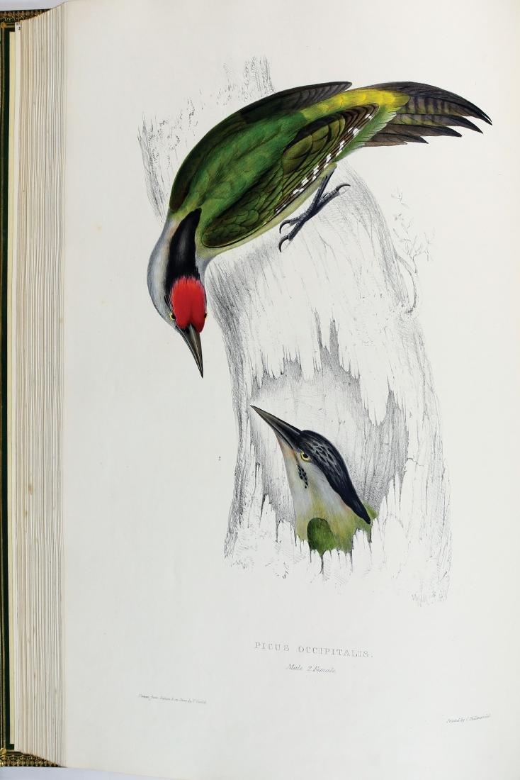Gould Birds of Himalaya, 1st Ed. - 2