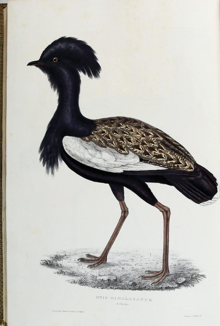 Gould Birds of Himalaya, 1st Ed. - 3