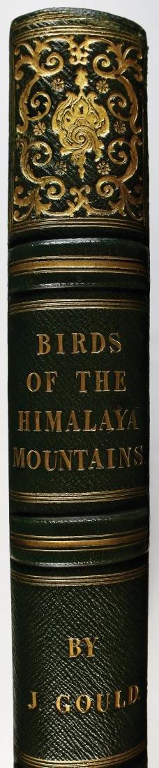 Gould Birds of Himalaya, 1st Ed. - 5