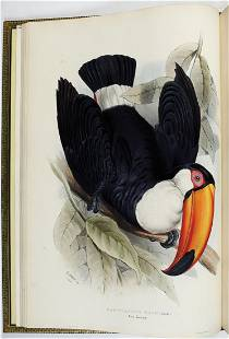 Gould Ramphastidae or Toucans, 1st Ed.