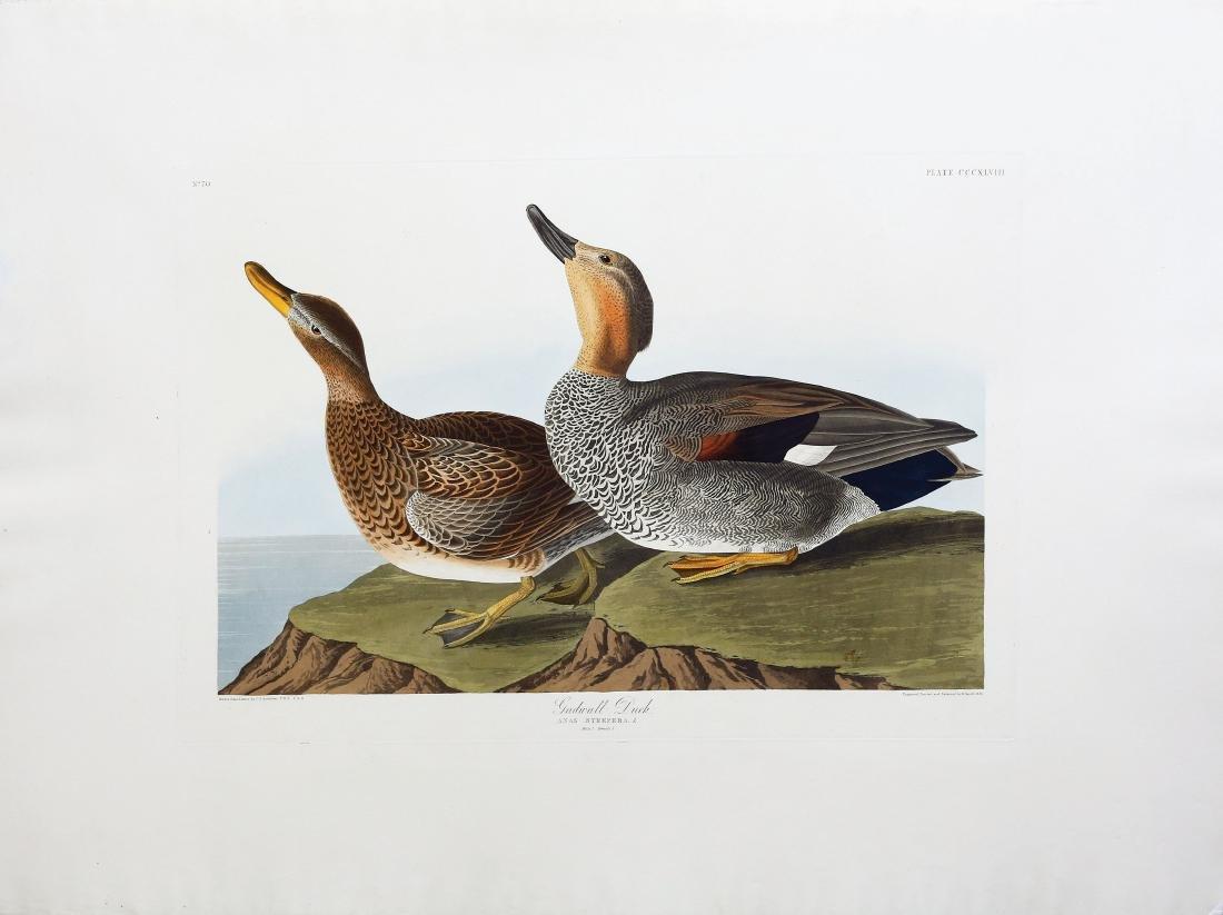 Audubon Aquatint, Gadwall Duck