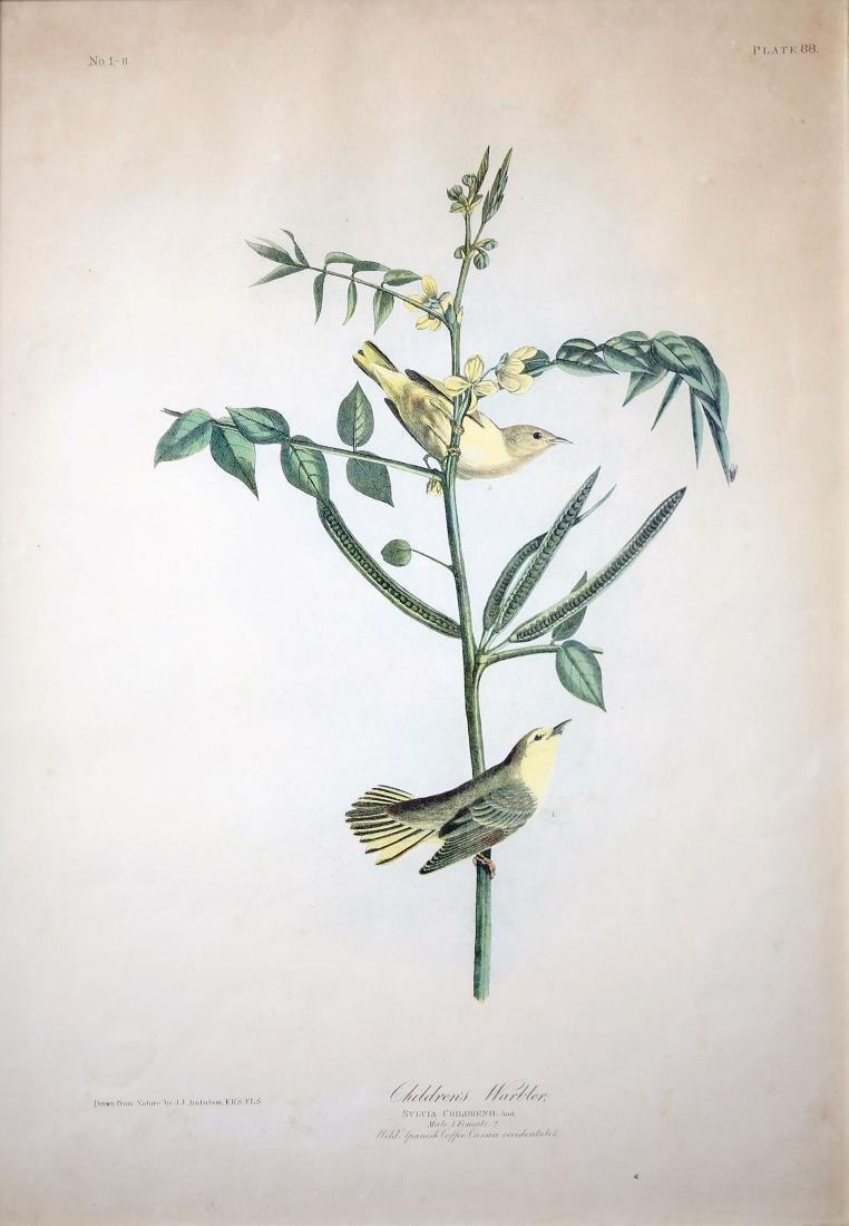 Audubon Aquatint, Children's Warbler