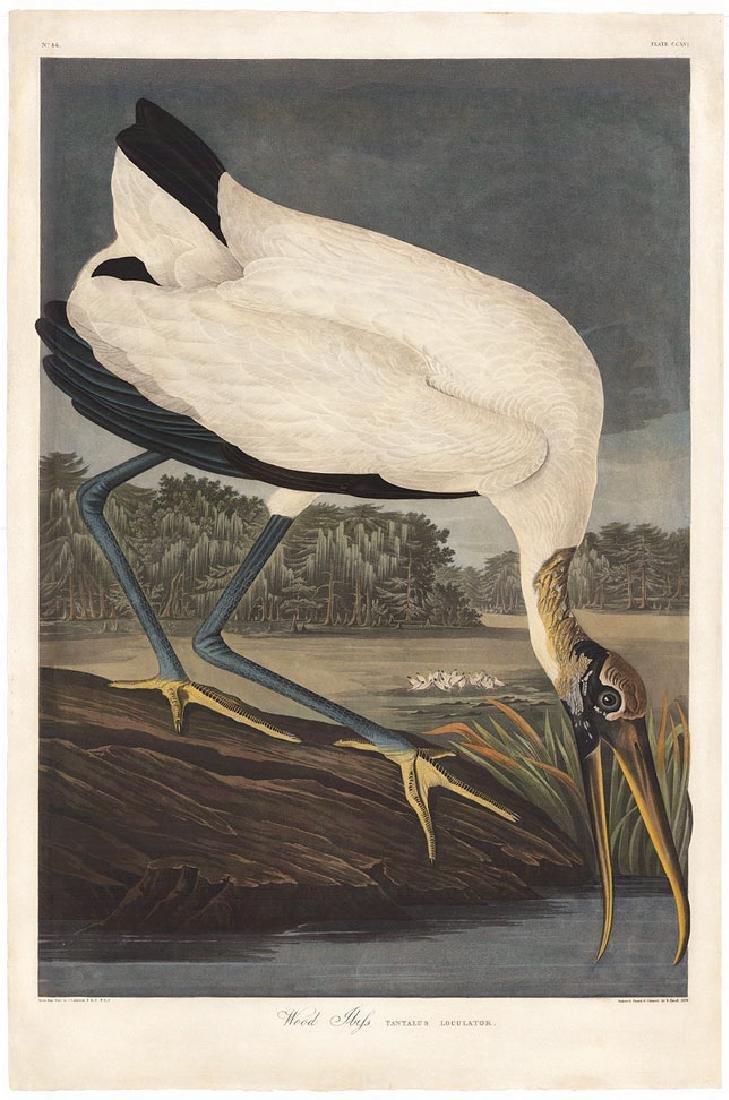 Audubon Aquatint, Wood Ibis