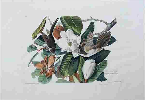Audubon Aquatint, Black-Billed Cuckoo
