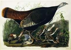Audubon Aquatint, Female Turkey