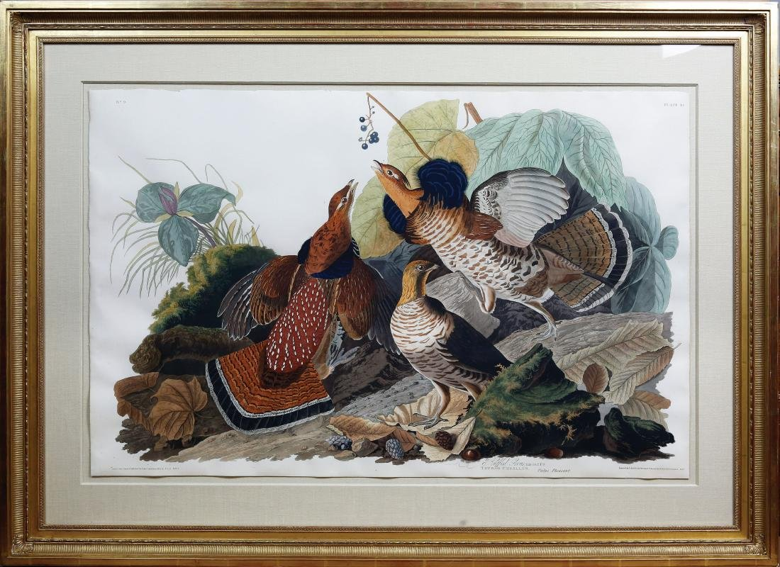 Audubon Aquatint, Ruffed Grous - 2