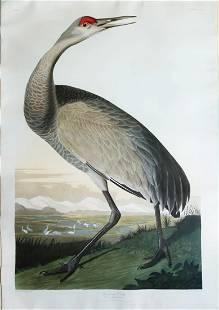 Audubon Aquatint, Hooping Crane