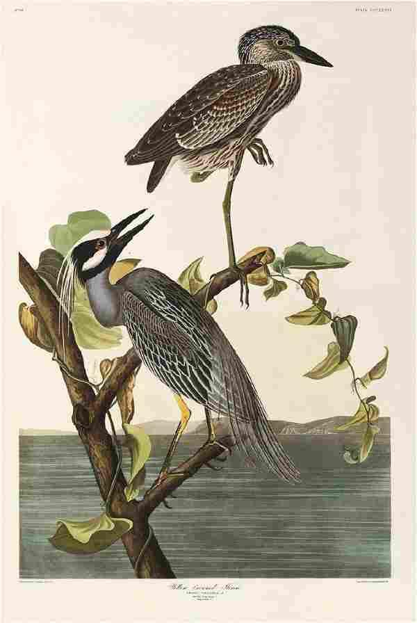 Audubon Aquatint, Yellow Crowned Heron