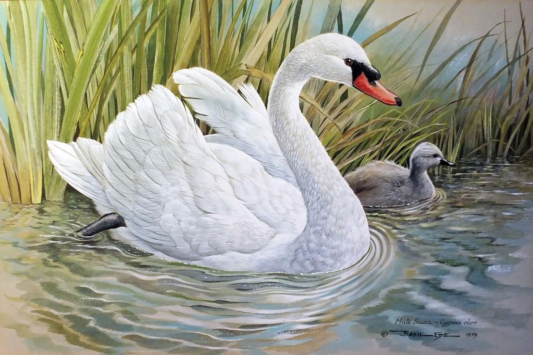 Ede Watercolor Swan