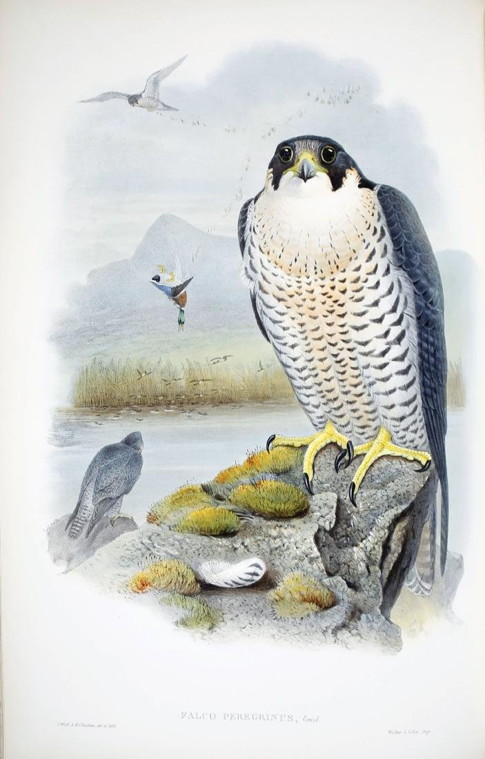 Gould Birds of Great Britain - 2