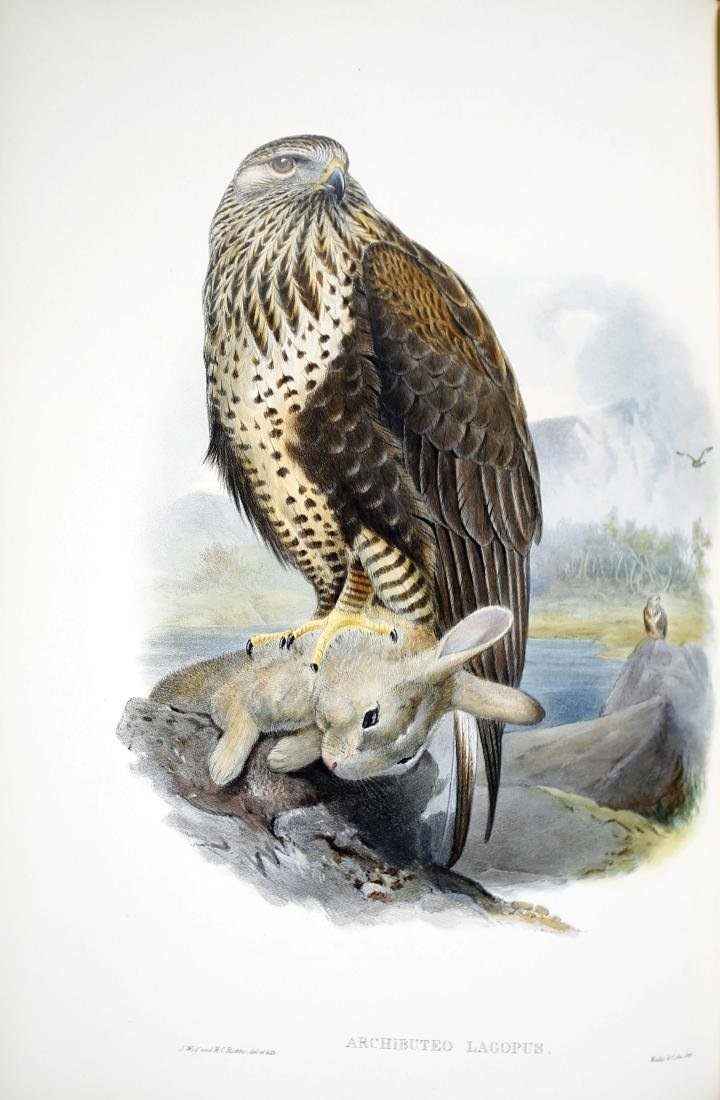Gould Birds of Great Britain - 3