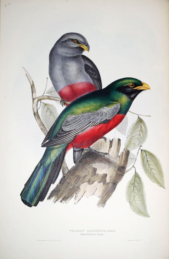 Gould Family of Trogons - 4