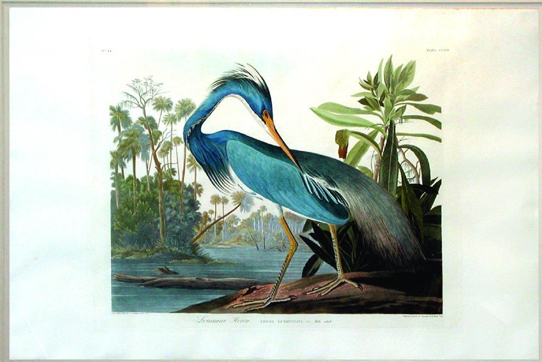 Audubon Bird Engraving, Louisiana Heron