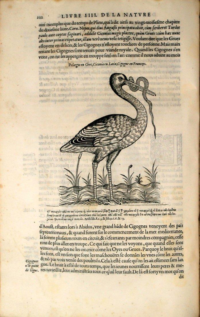 Belon Rare Ornithology Book - 6