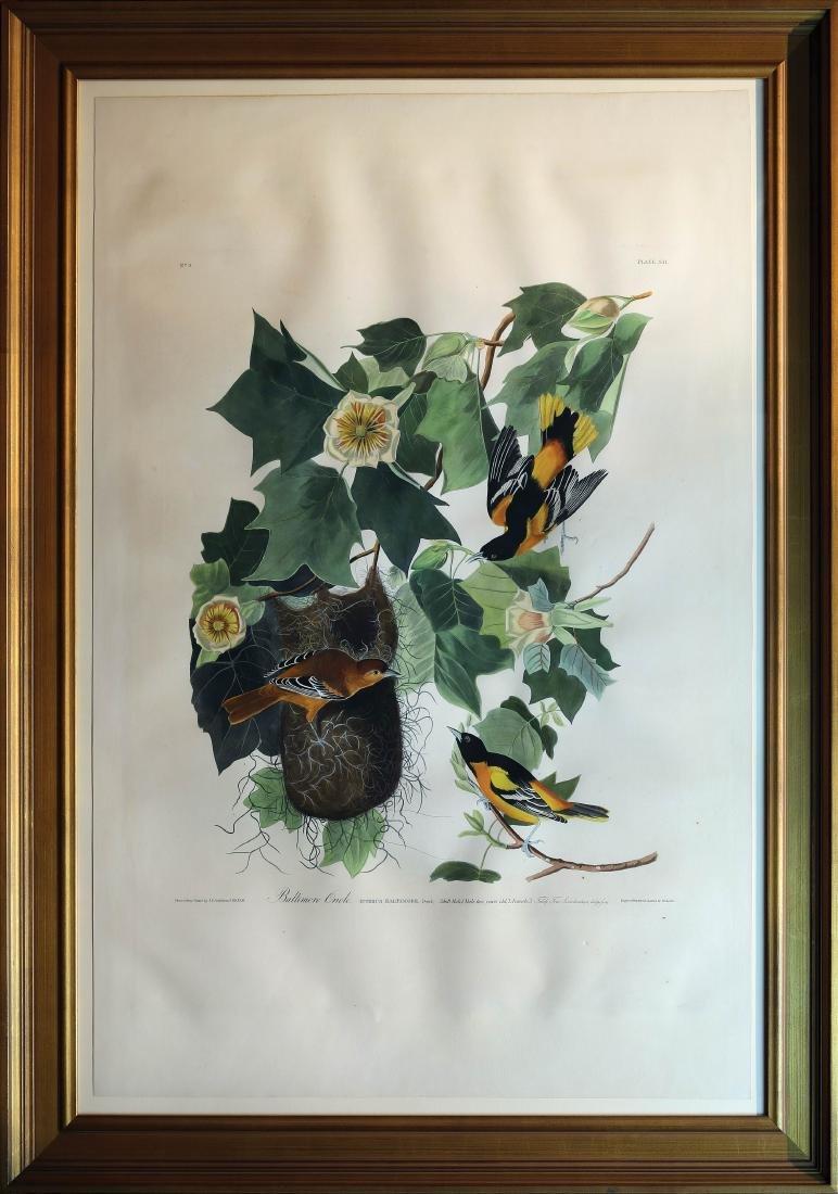 Audubon Aquatint Baltimore Oriole - 2