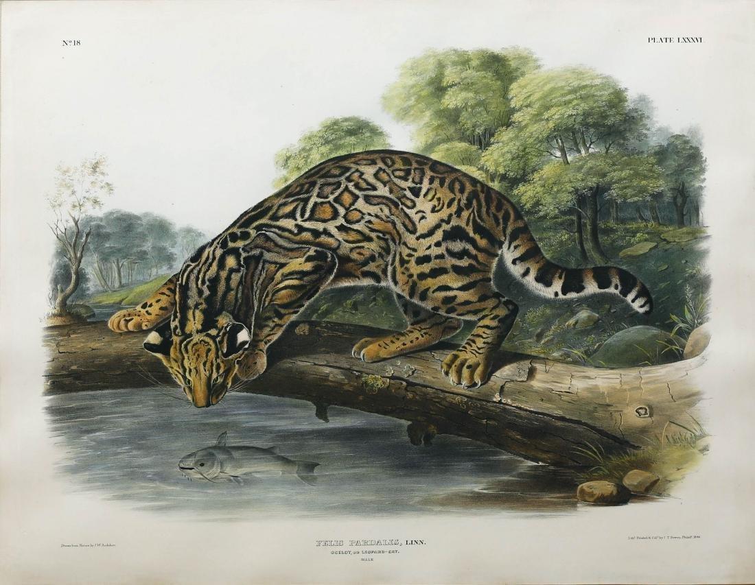Audubon Lithograph Ocelot