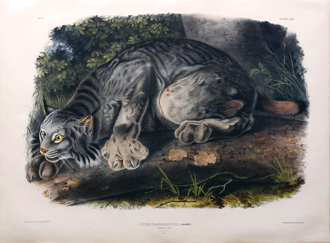 Audubon Lithograph Canada Lynx
