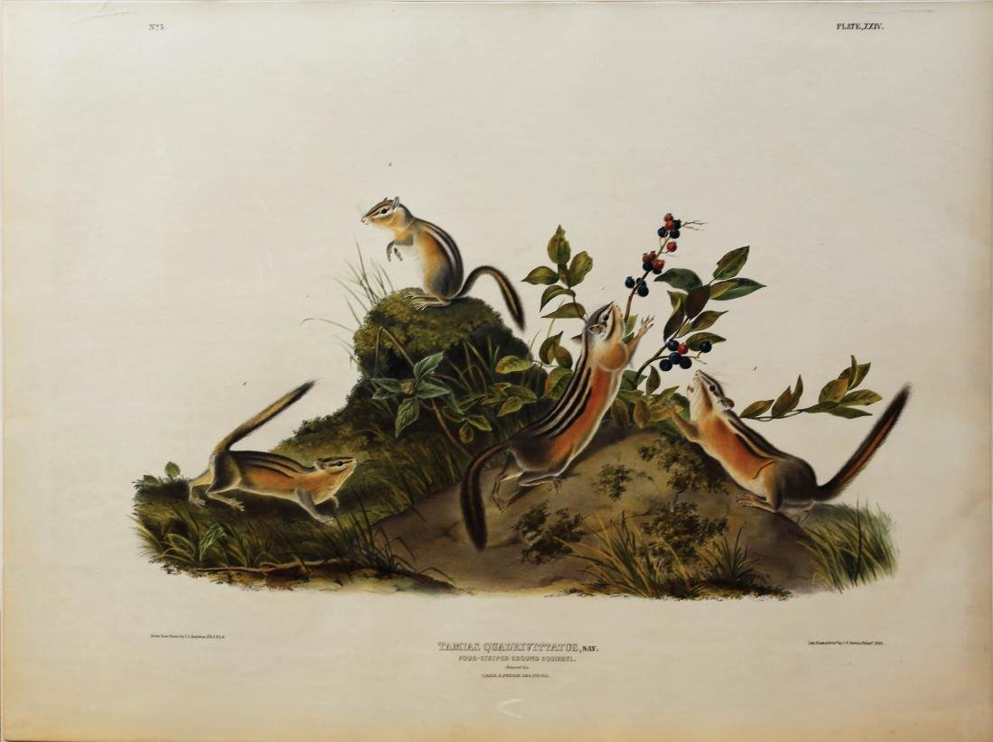 Audubon Lithograph Ground Squirrel