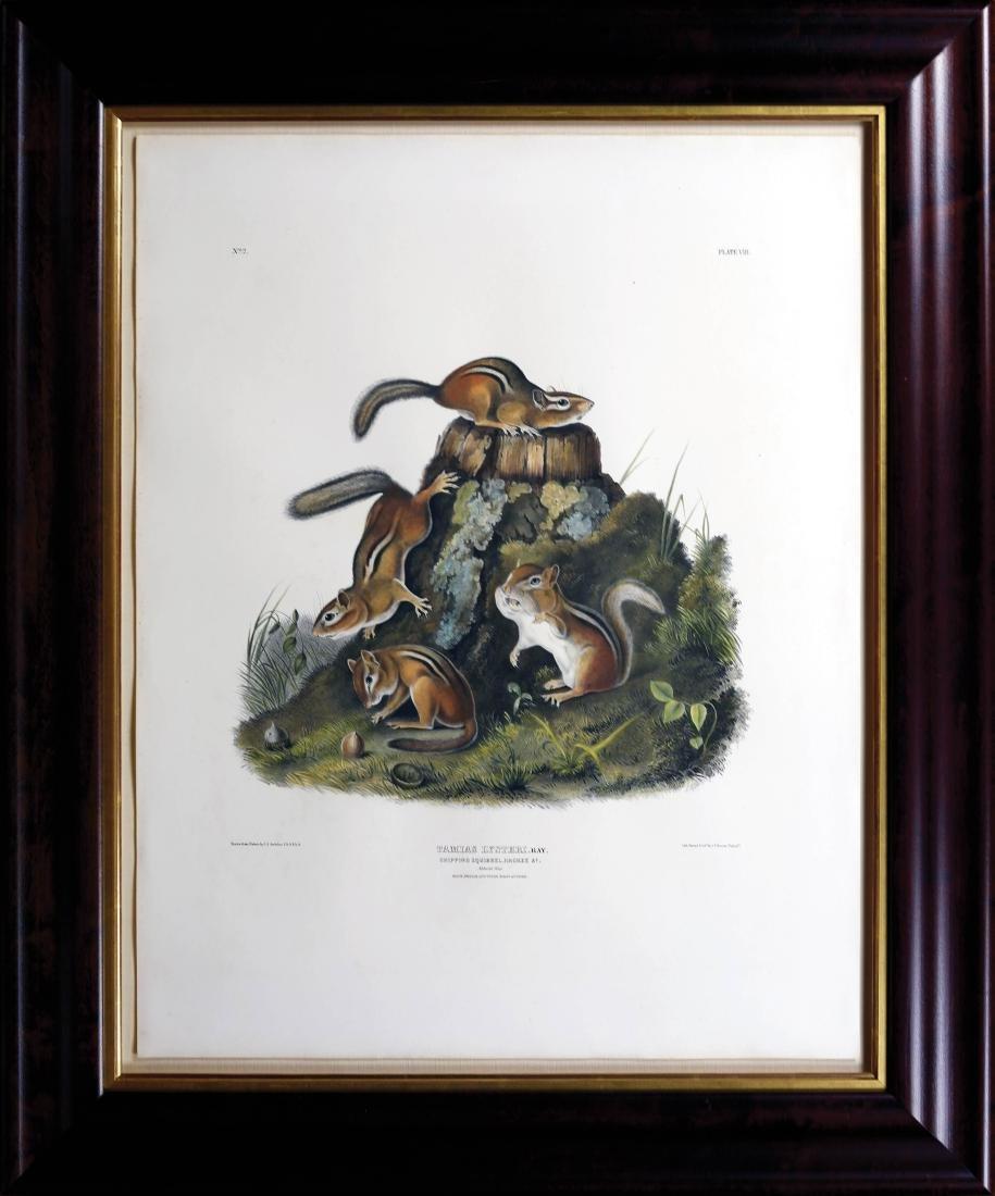 Audubon Lithograph Chipping Squirrel - 2
