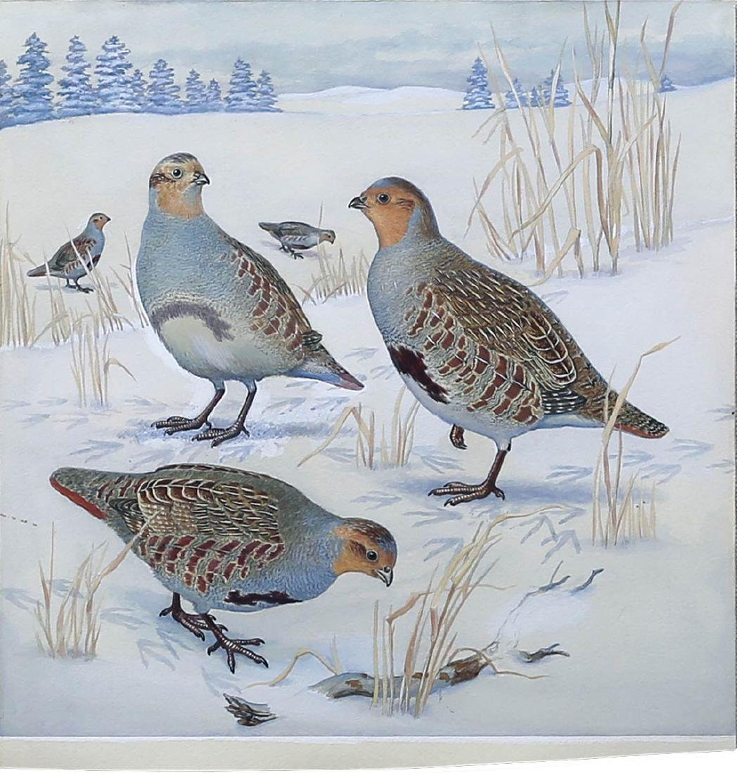 Signer Watercolor of a Partridge