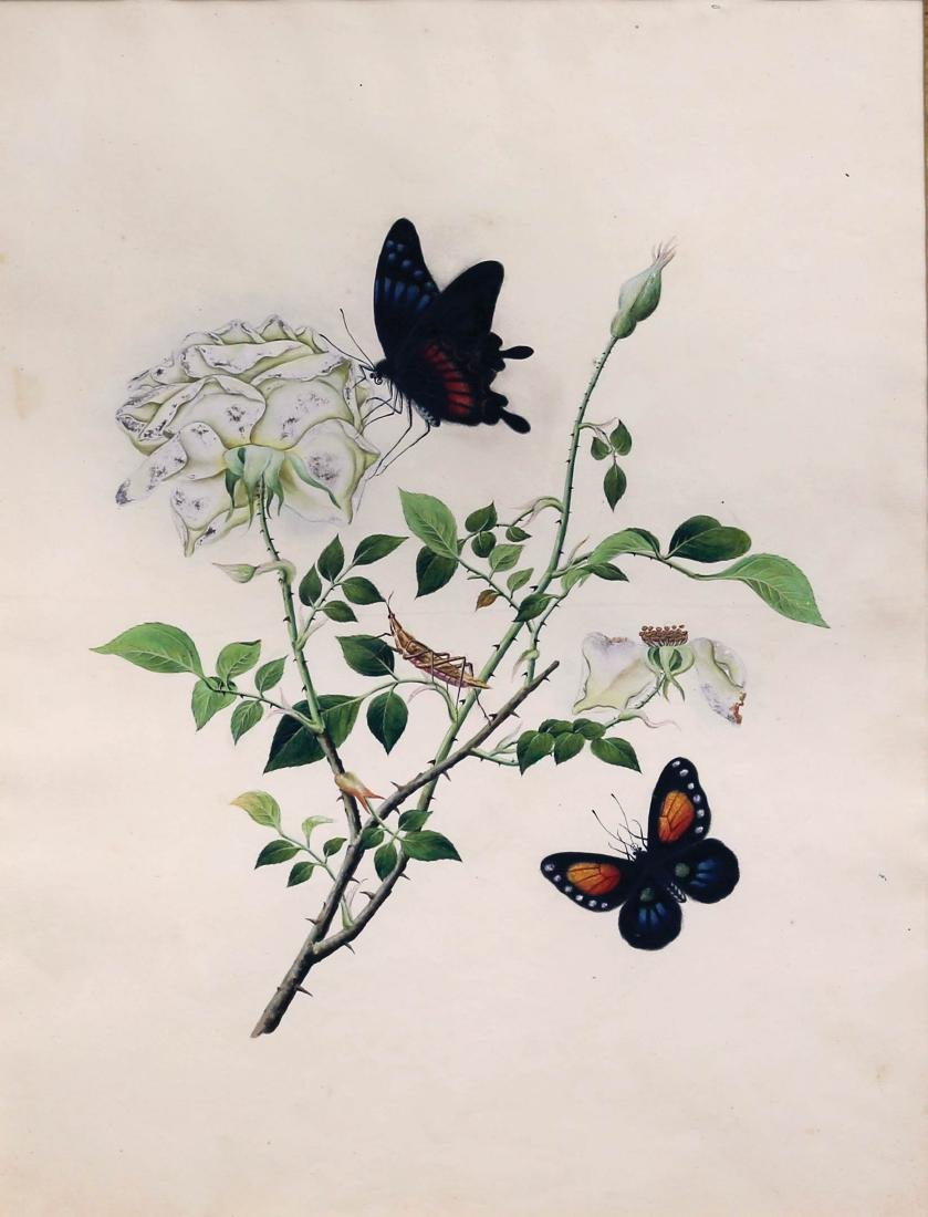 Chinese School Butterfly Watercolor