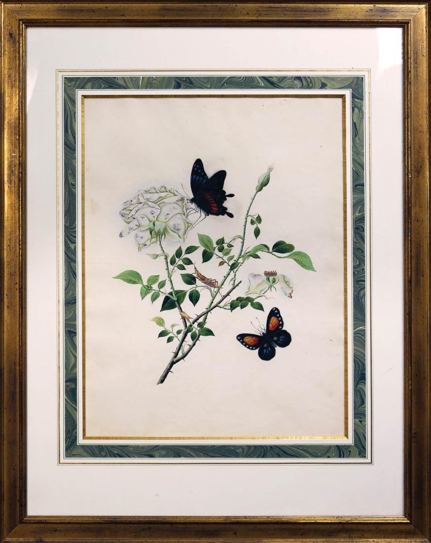 Chinese School Butterfly Watercolor - 2