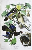 Audubon Aquatint, Summer or Wood Duck