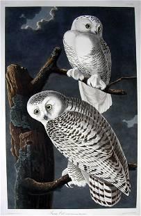 Audubon Aquatint, Snowy Owl