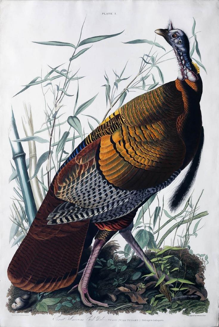 Audubon Havell Aquatint, Male Turkey