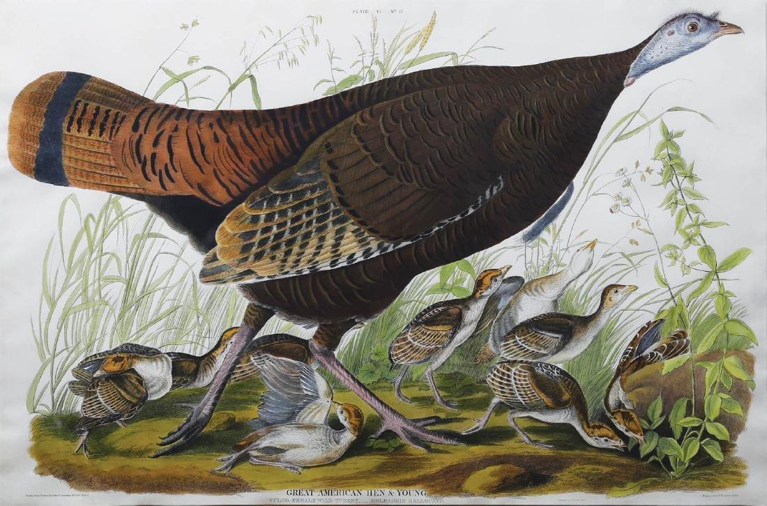 Audubon Havell Aquatint, Female Turkey
