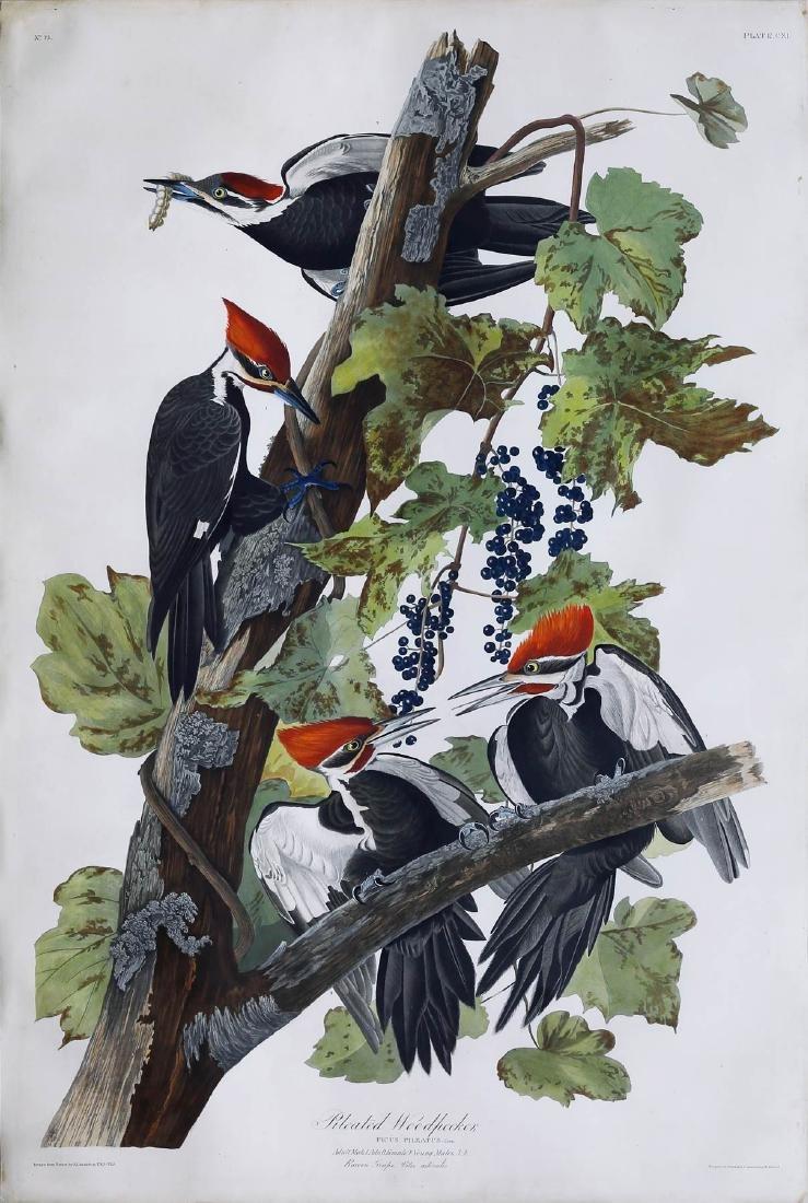 Audubon Havell Aquatint, Pileated Woodpecker