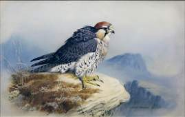 Johnson watercolor of a Hawk