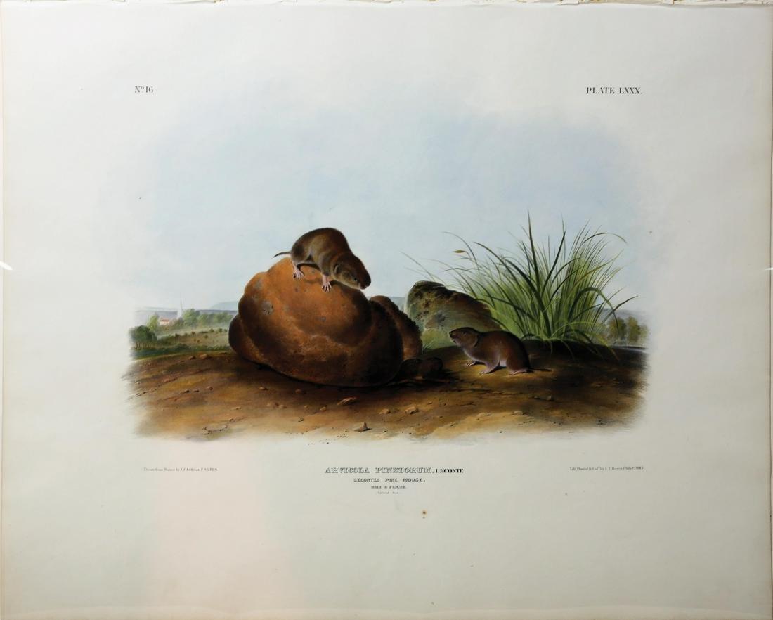 Audubon Imperial Folio Quadrupeds