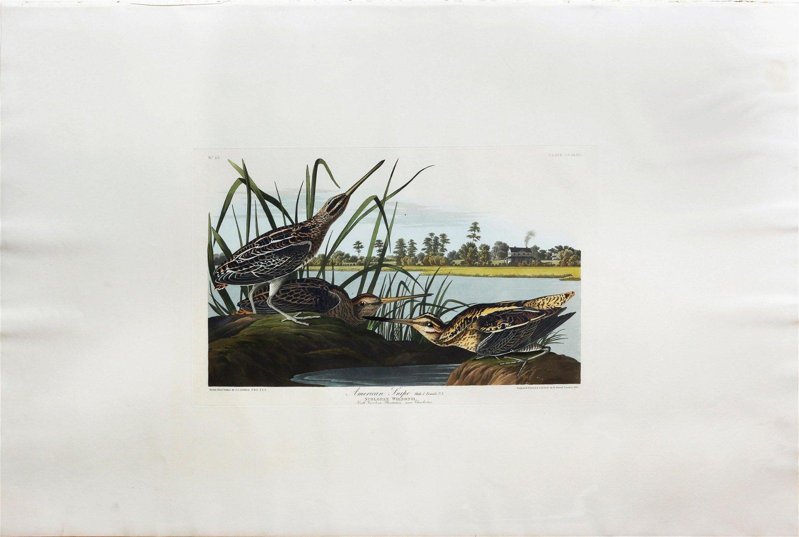 Audubon Aquatint, American Snipe