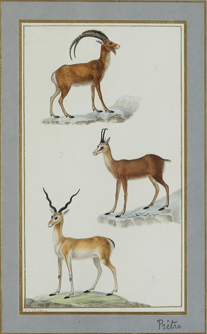 Pretre Deer Watercolor