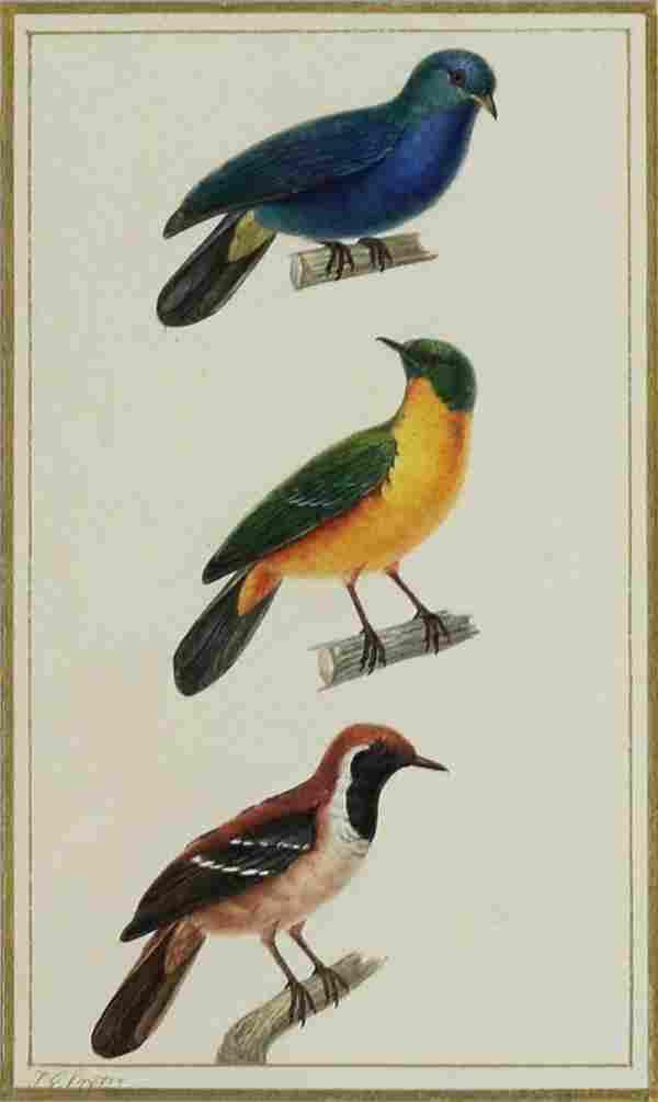 Pretre Hawks Watercolor
