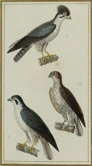 Pretre bird Watercolor