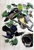Audubon Aquatint Wood Duck