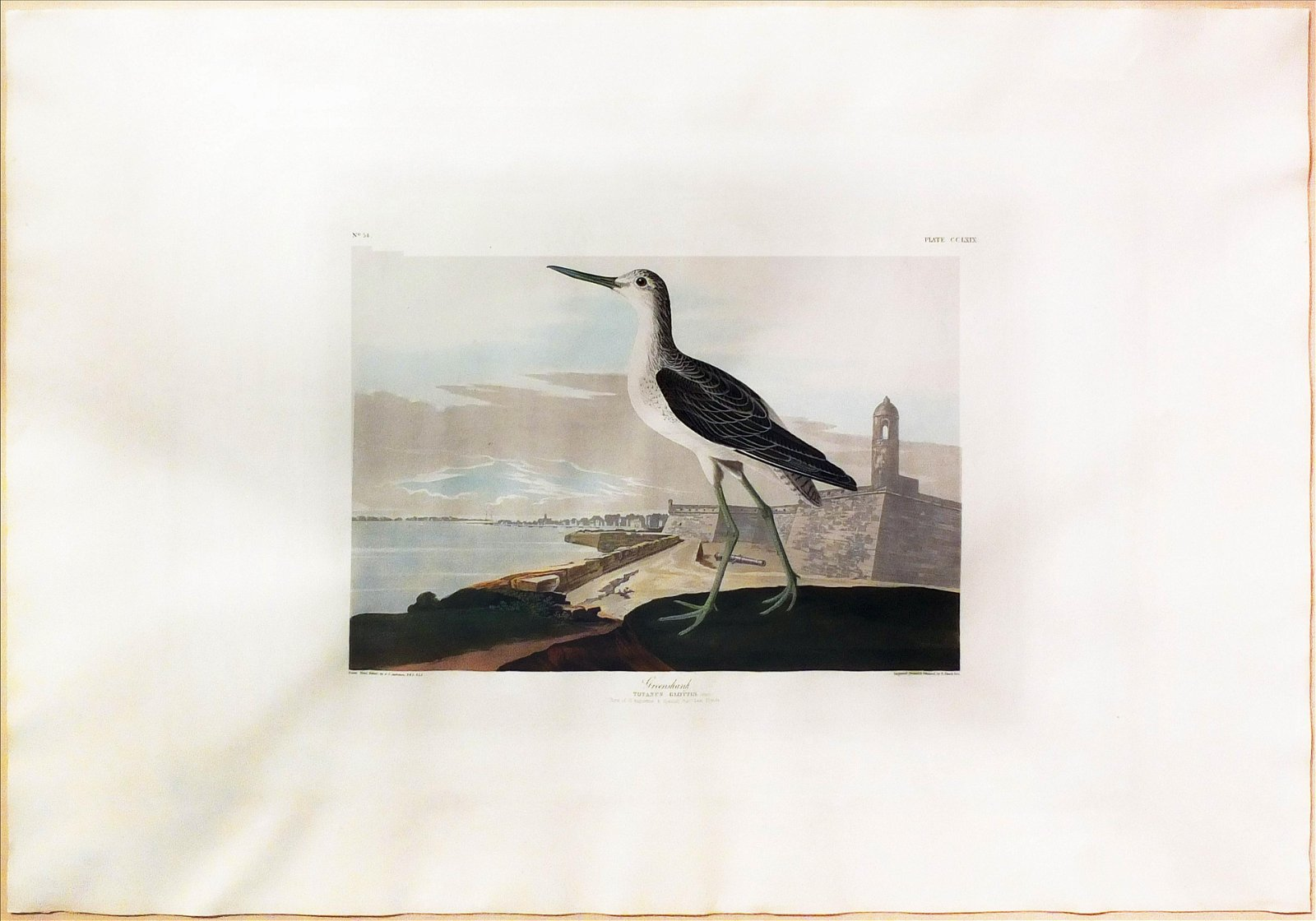 Audubon Aquatint, Greenshank