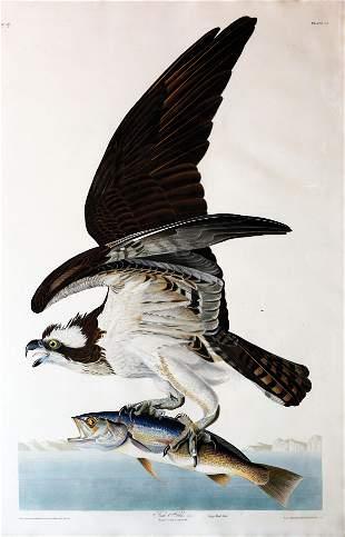 Audubon Aquatint, Fish Hawk