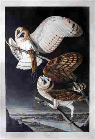 Audubon Aquatint, Barn Owl.