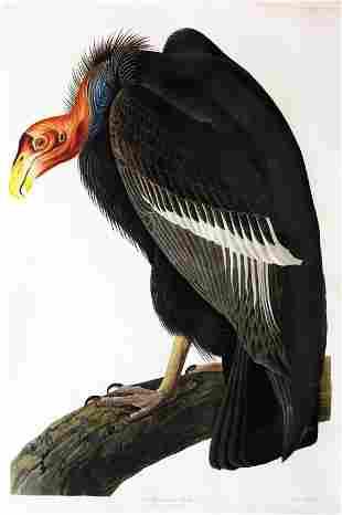 Audubon Aquatint, California Vulture