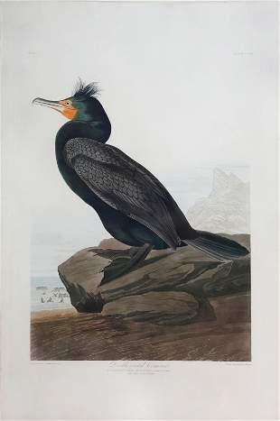 Audubon Aquatint, Double-Crested Cormorant