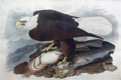 Audubon Aquatint, White-Headed Eagle