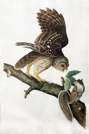 Audubon Aquatint, Barred Owl