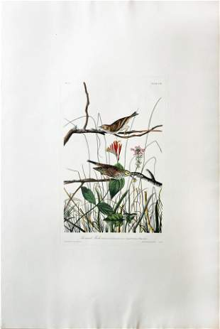 Audubon Aquatint, Savannah Finch