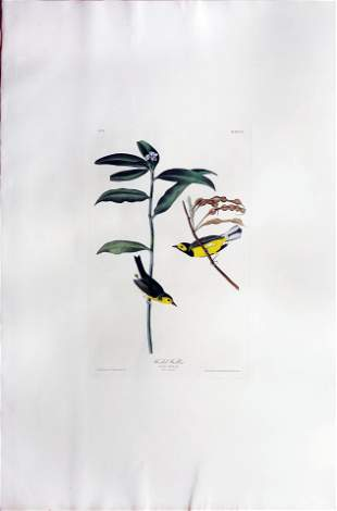 Audubon Aquatint, Hooded Warbler