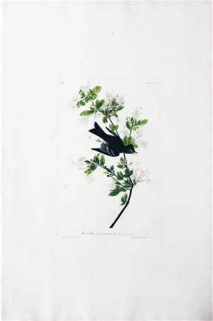 Audubon Aquatint, Wood Peewee