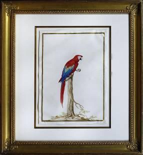 Robert Watercolor of a Macaw